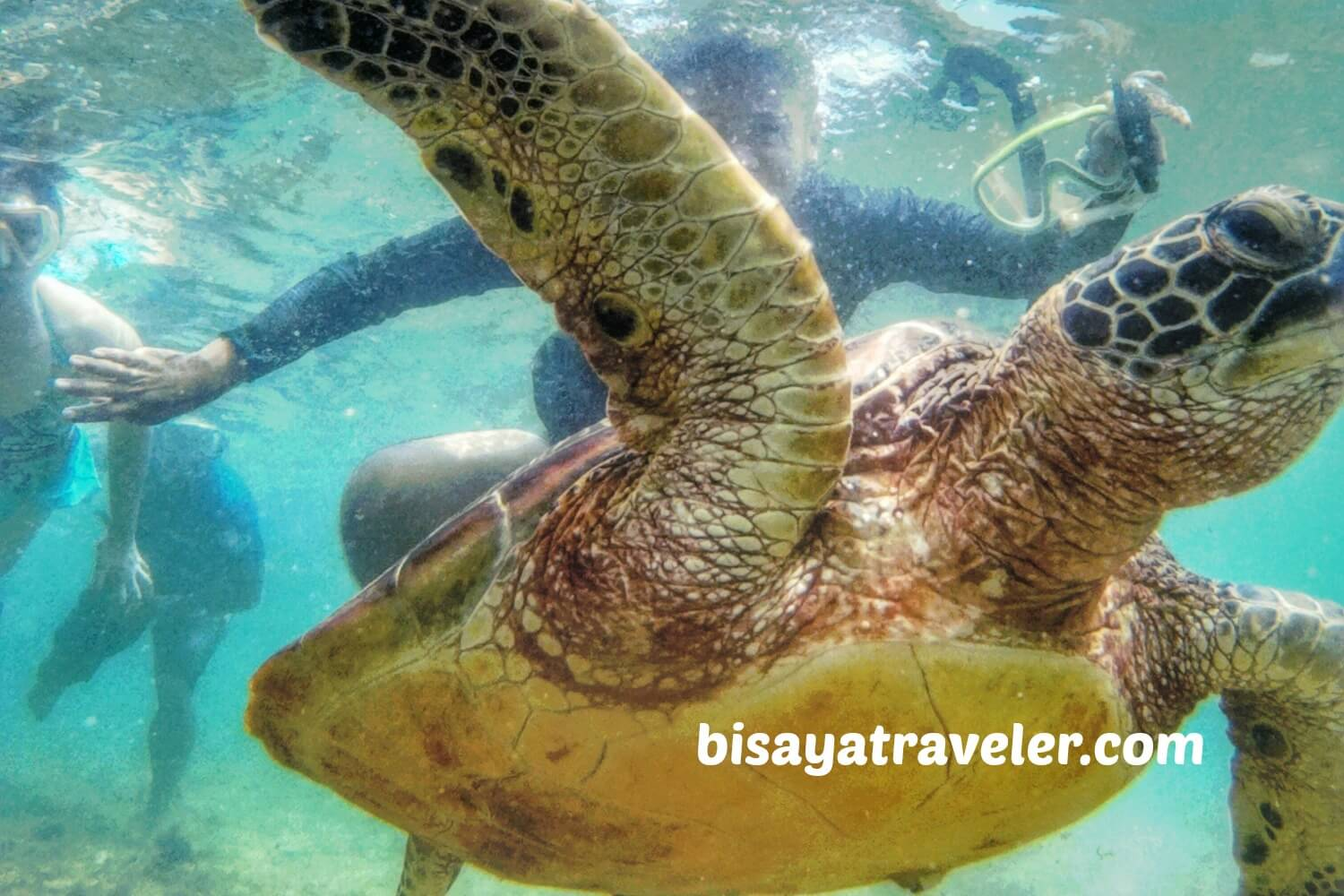 Apo Island: A Day Trip Guide To One Of Negros Oriental's Treasures