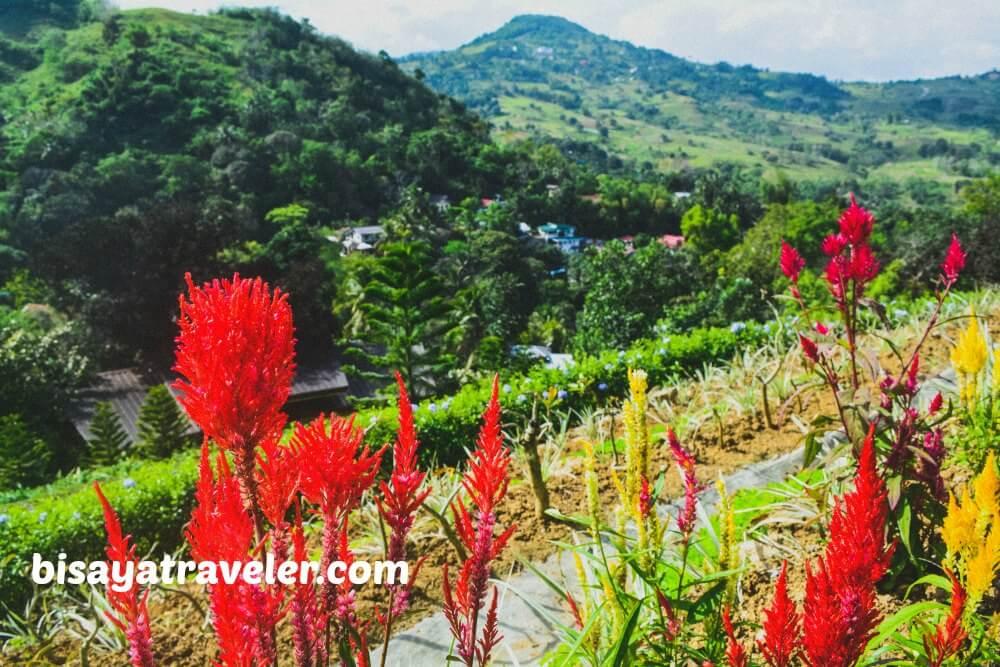Terrazas De Flores Botanical Garden Cebu S Breezy Floral