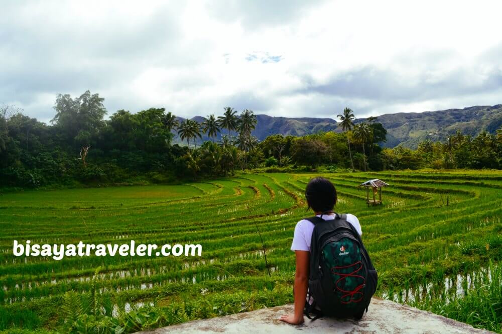Taking In The Scenery Of The Verdant Rice Paddies In Boljoon