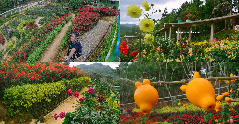 Buwakan Ni Alejandra: Balamban's Surprisingly Wonderful Garden
